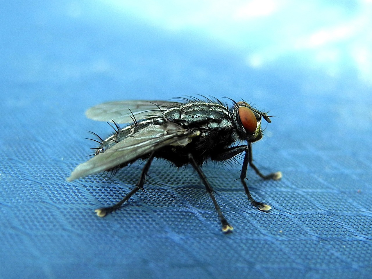 How To Get Rid Of House Flies For Good (The Ultimate Step-by-Step ...