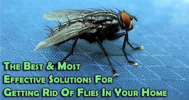 How To Get Rid Of Outdoor Flies Naturally